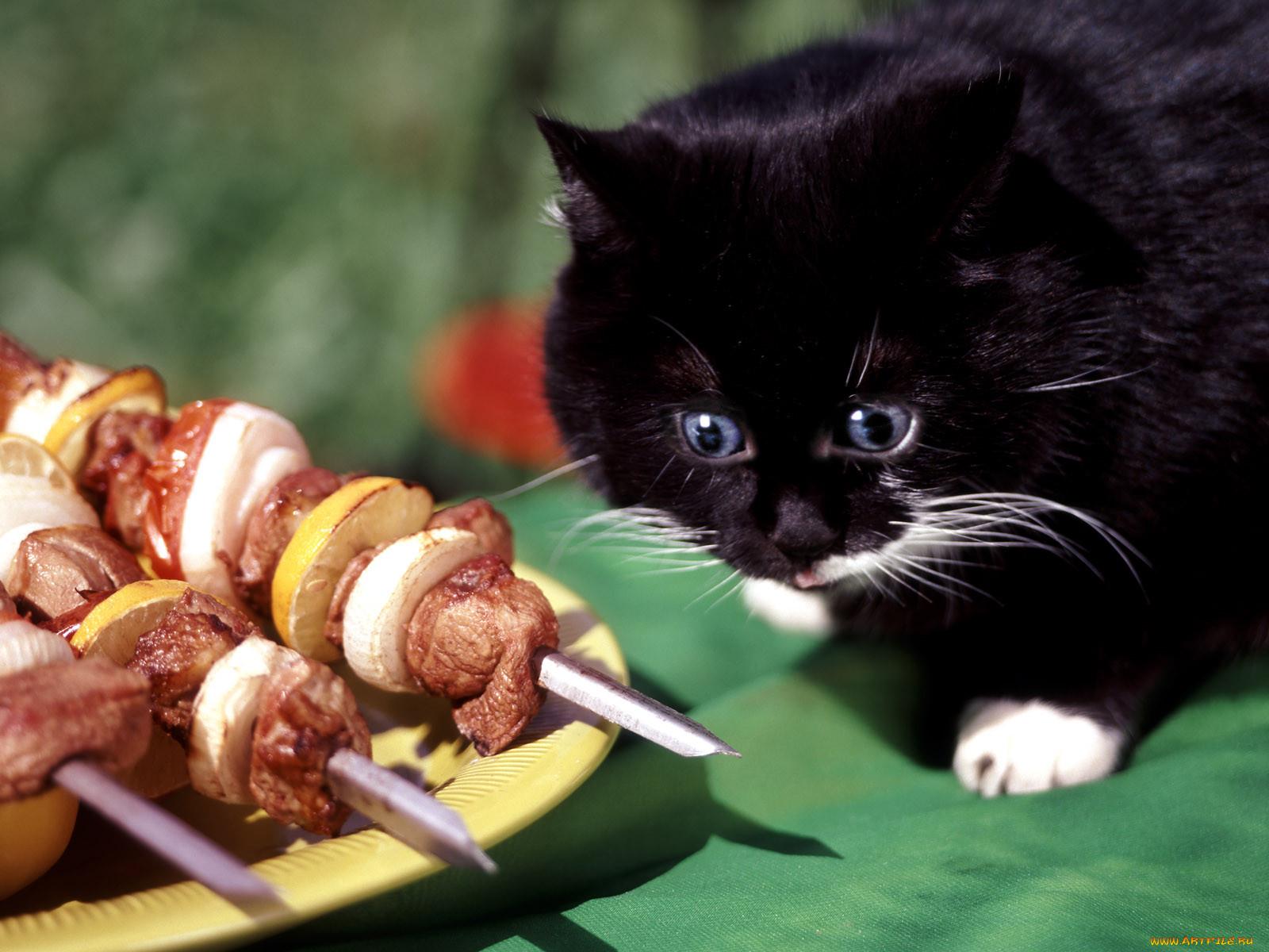 картинка смешная животные идет на обед договоры